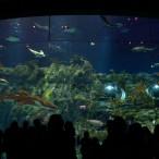 Ocean Park Shark Main Tank
