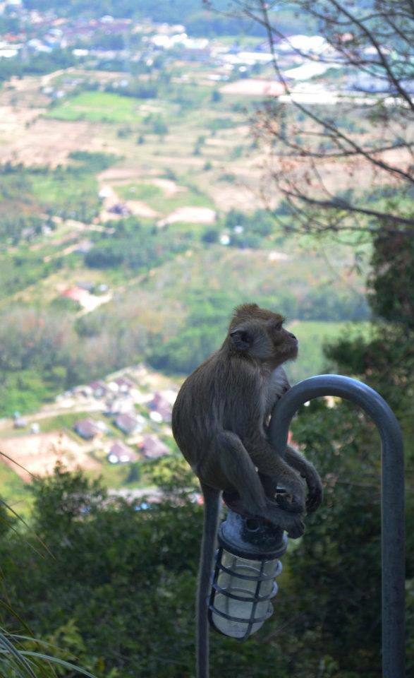Monkey at the top of the tiger temple in Krabi Thailand