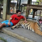 Sitting with a tiger at  the Tiger Temple in Chiang Mai