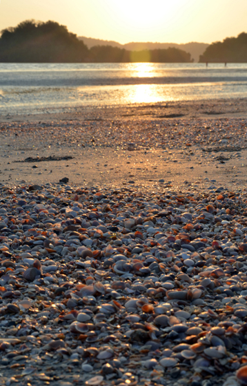 Ao Nang Shells