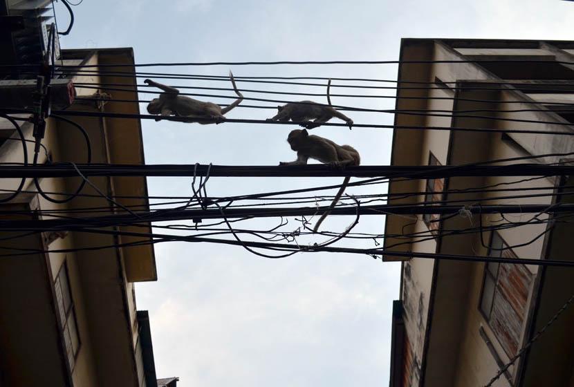 monkeys above