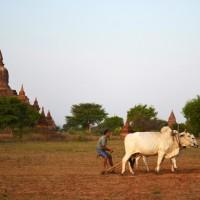 Buledi Bagan Myanmar