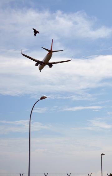 plane bird pole