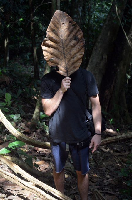 Giant Leaf in Taman Negara Jungle