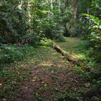 Taman Negara Trail